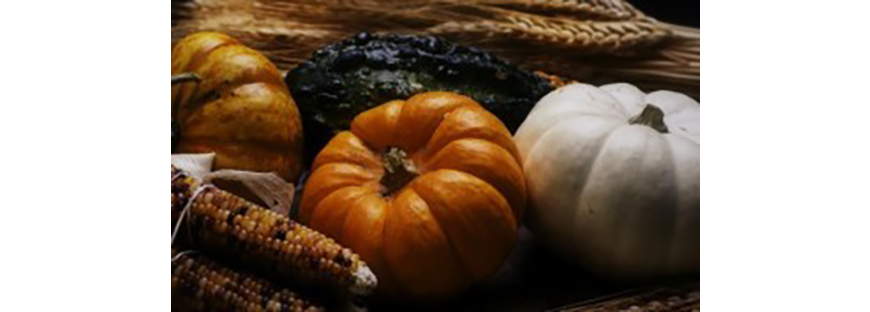 pumpking harvest image
